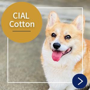 CIAL Cottonページへ